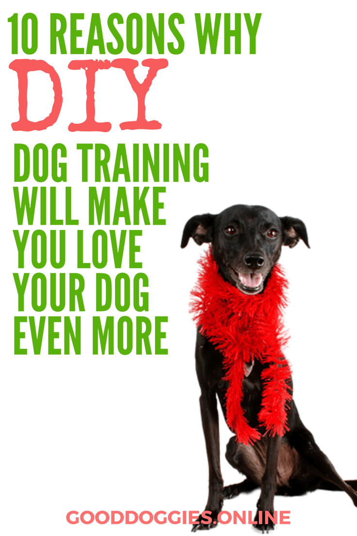 10 Reasons Why Diy Dog Training Will Make You Love Your Dog Even