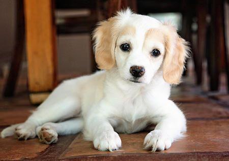 Violet The Mixed Breed Mixed Breed Puppies Cute Dog Mixes Mixed Breed