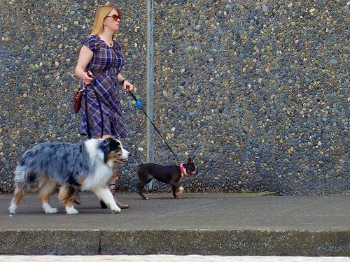 Why Do You Need to Walk Your Dog Everyday? - Family Spot Blog