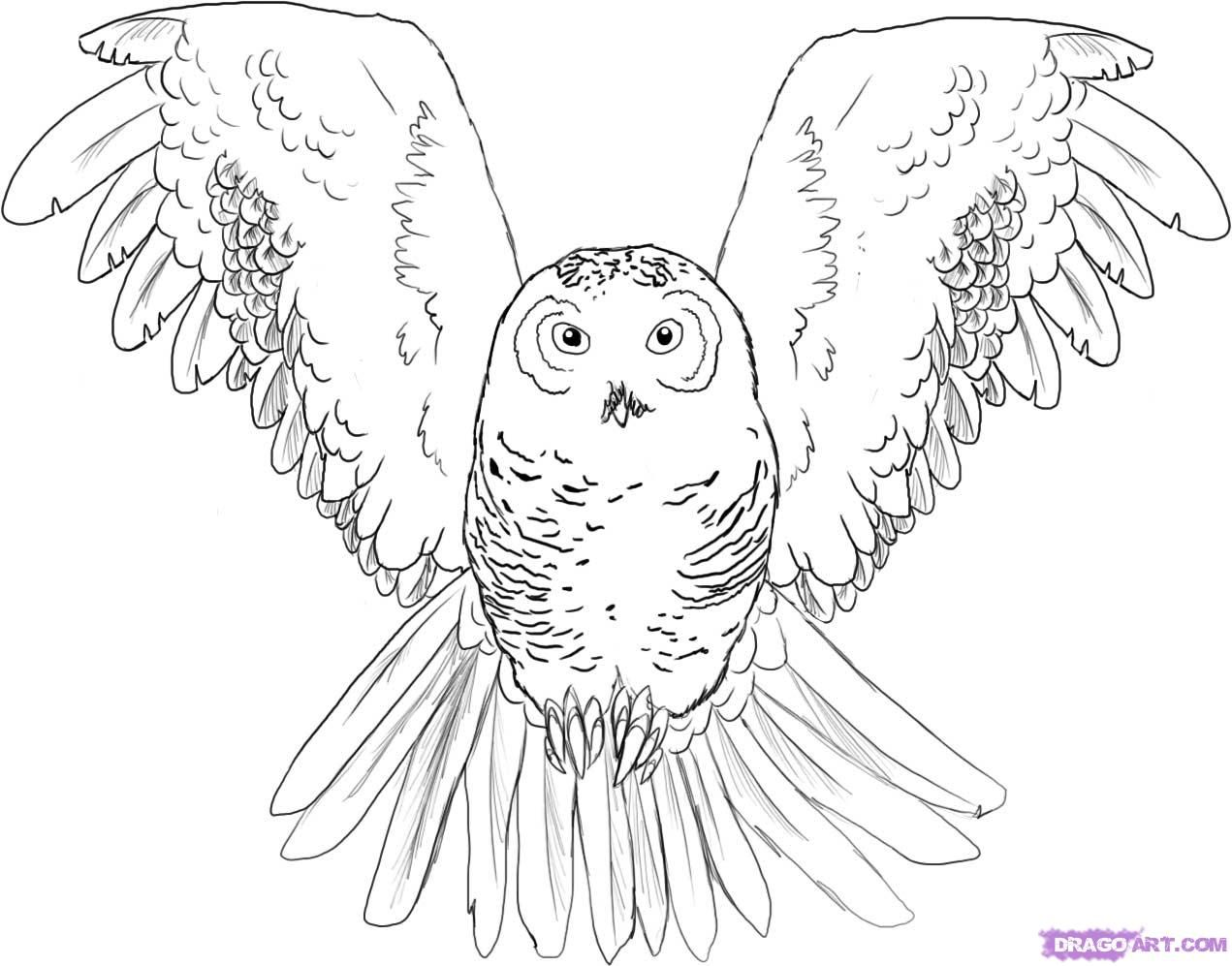 how to draw an owl in two easy steps
