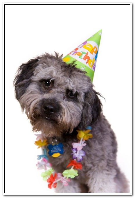 HUMANE SOCIETY ANNIVERSARY:22nd (It Started On This Day In