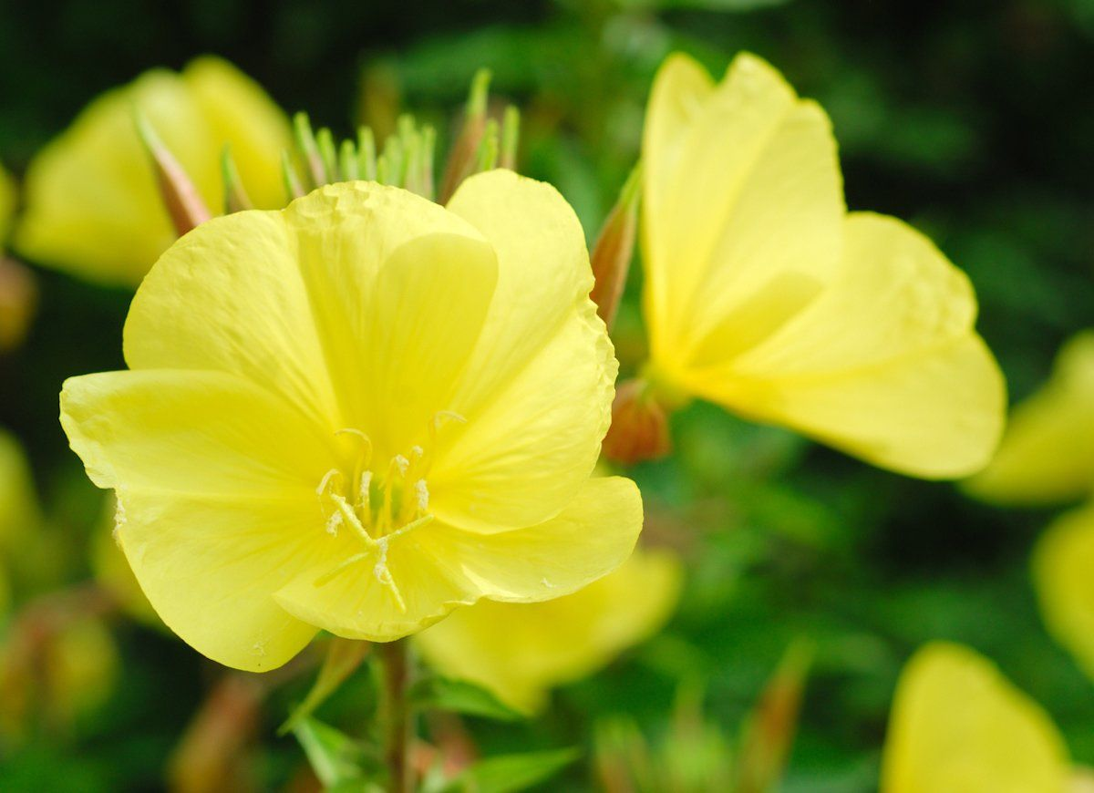 These 10 Fascinating Garden Flowers Bloom Only At Night Night