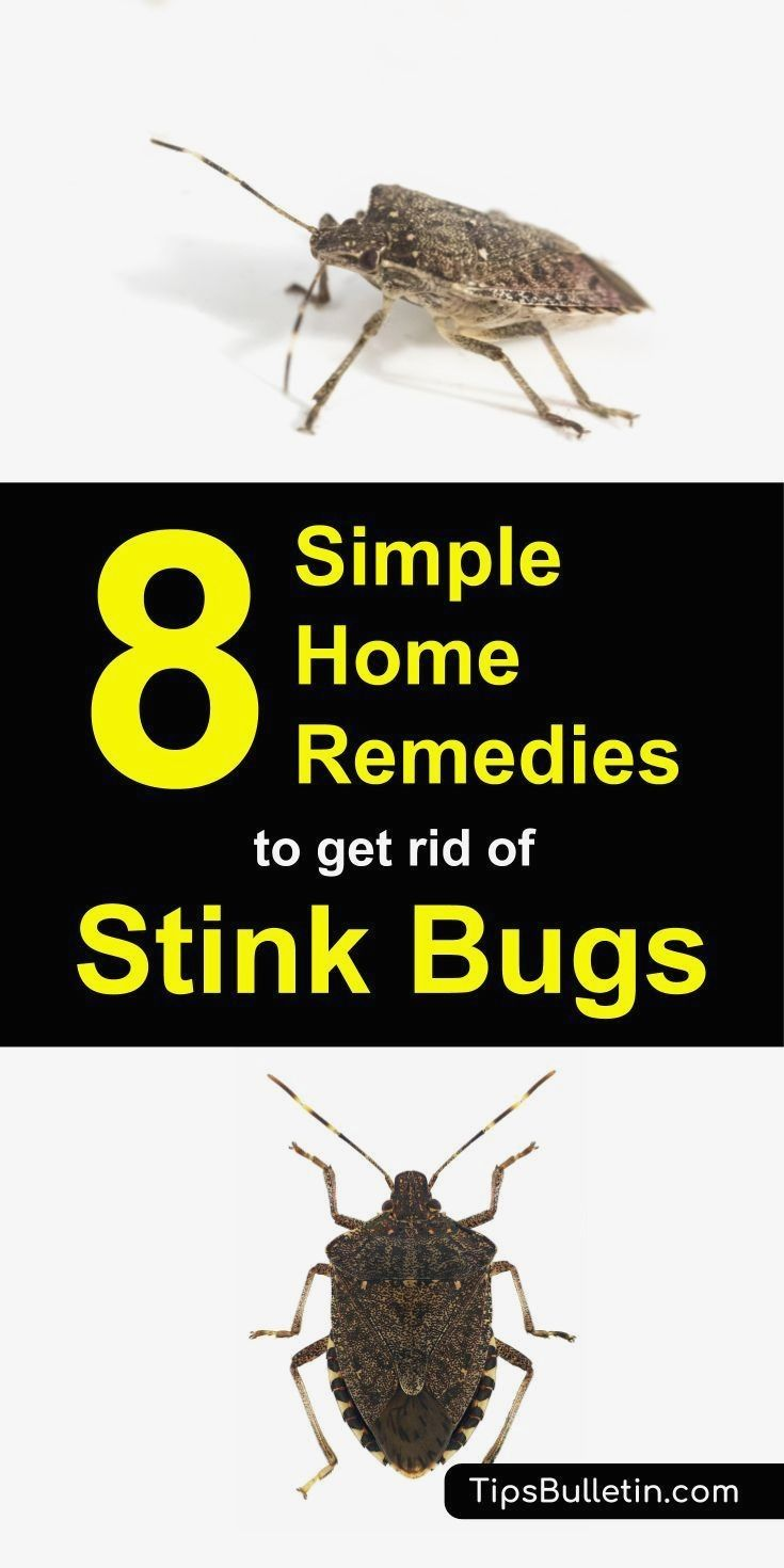 How To Get Rid Of Beetle Bugs In House