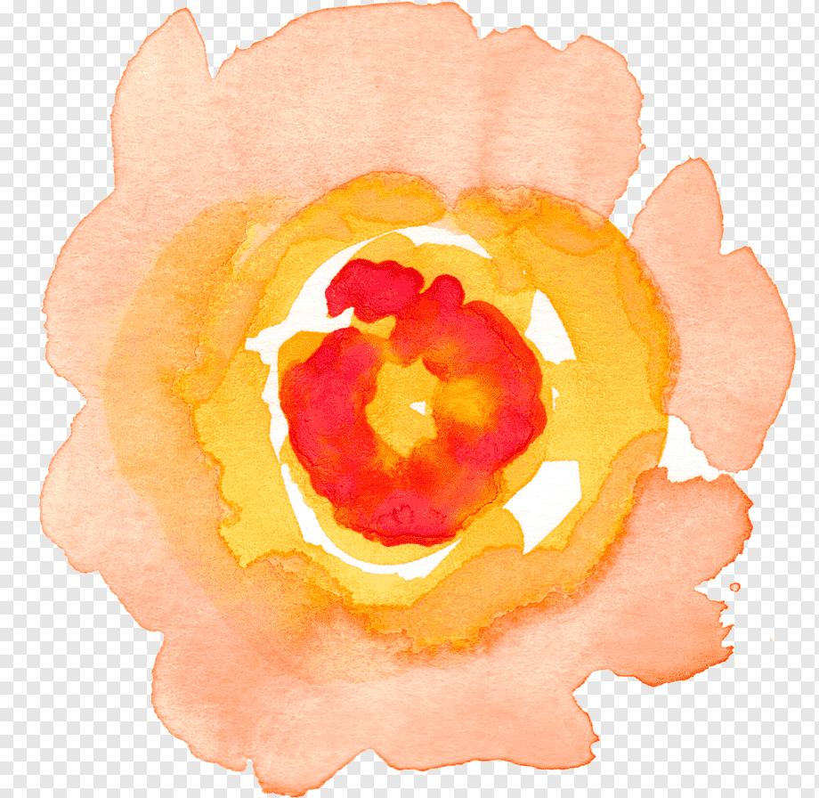 Watercolour Flowers Watercolor Painting Watercolor Rose Orange Color Chamomile Pn Watercolor Flowers Paintings Free Watercolor Flowers Blue Flower Painting