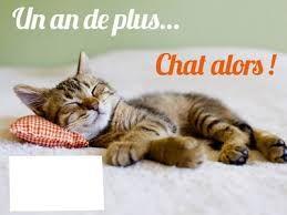 """Résultat de recherche d'images pour """"image gratuites d anniversaire avec chat"""""""