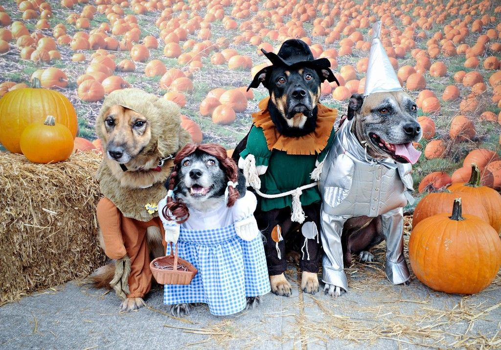 Dogs Halloween 2012 quite a family here, turning into #dog pumpkins at midnight...  #DressedDogs #pets