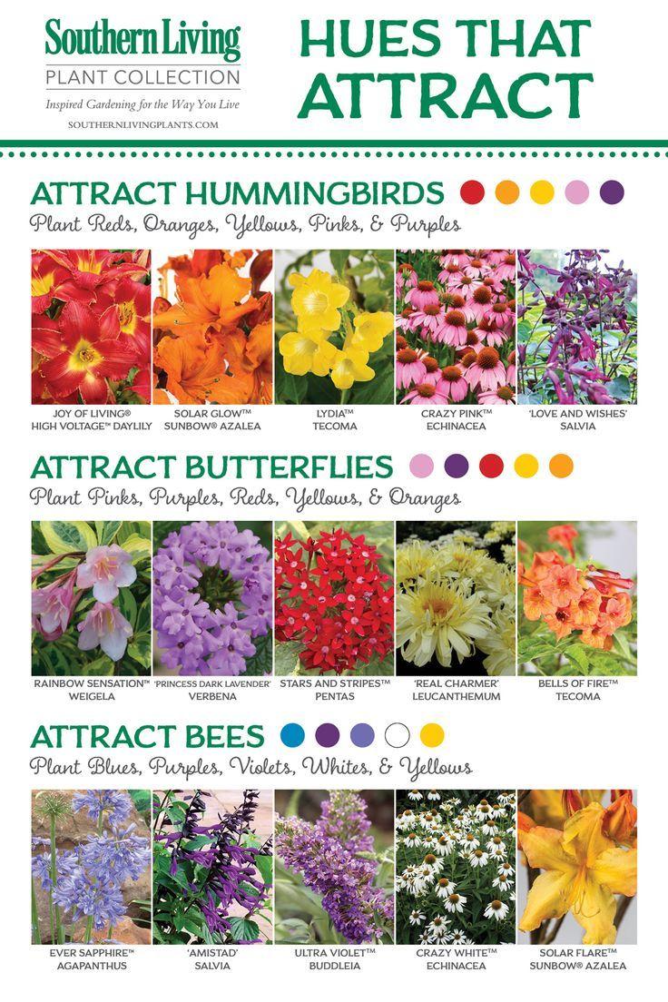 Natural Attraction | Hummingbird plants, Plants, Bee garden