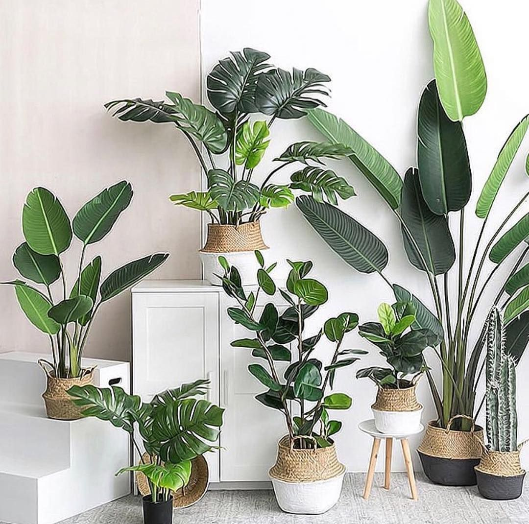 "HOUSEPLANT AESTHETIC on Instagram: ""C U R A T E D 📷: @mdrnstudio . . . . .  . #houseplantaesthetic #minimalism #m… 