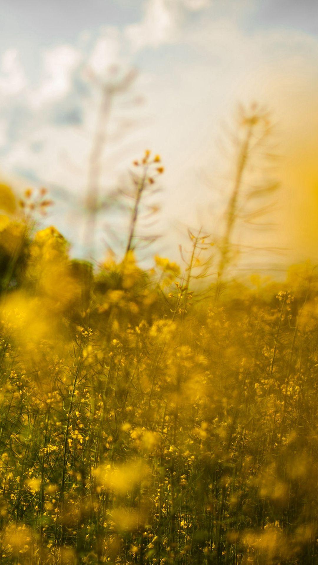 Nature Yellow Flower Bokeh Spring Happy iPhone 6 plus