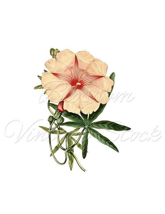 Pink Flower Clipart, Pink Flower PNG Digital Image, Vintage Image for print, digital artwork  INSTANT DOWNLOAD- 1718