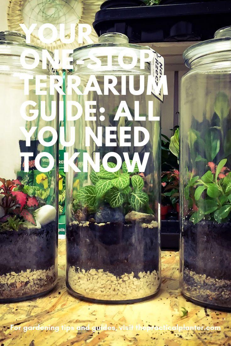 Terrarium Fermé Plante Grasse your one-stop terrarium guide: all you need to know | idées