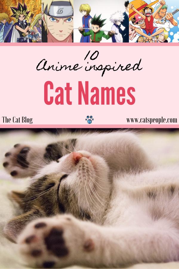 10 Anime Inspired Cat Names Cat Names Cat Parenting Anime Cat