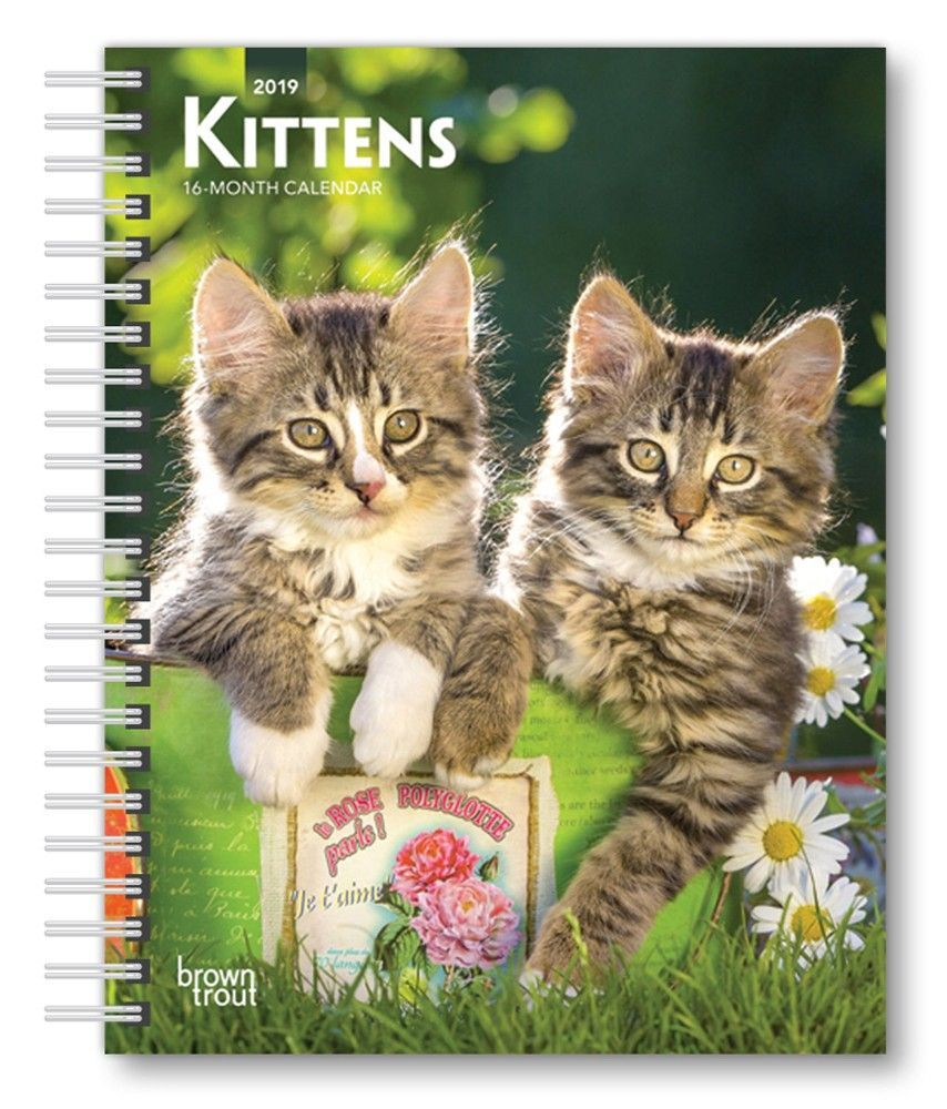 Kittens 2019 6 X 7 75 Inch Weekly Engagement Calendar Animals Kittens Isbn 978 1 9754 0164 1 Kittens Animals Calendar