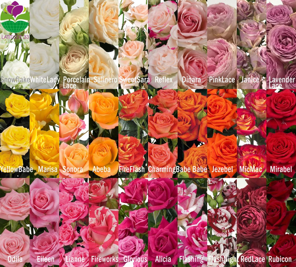 Rose Color Identification - match your spray roses to wedding or ...