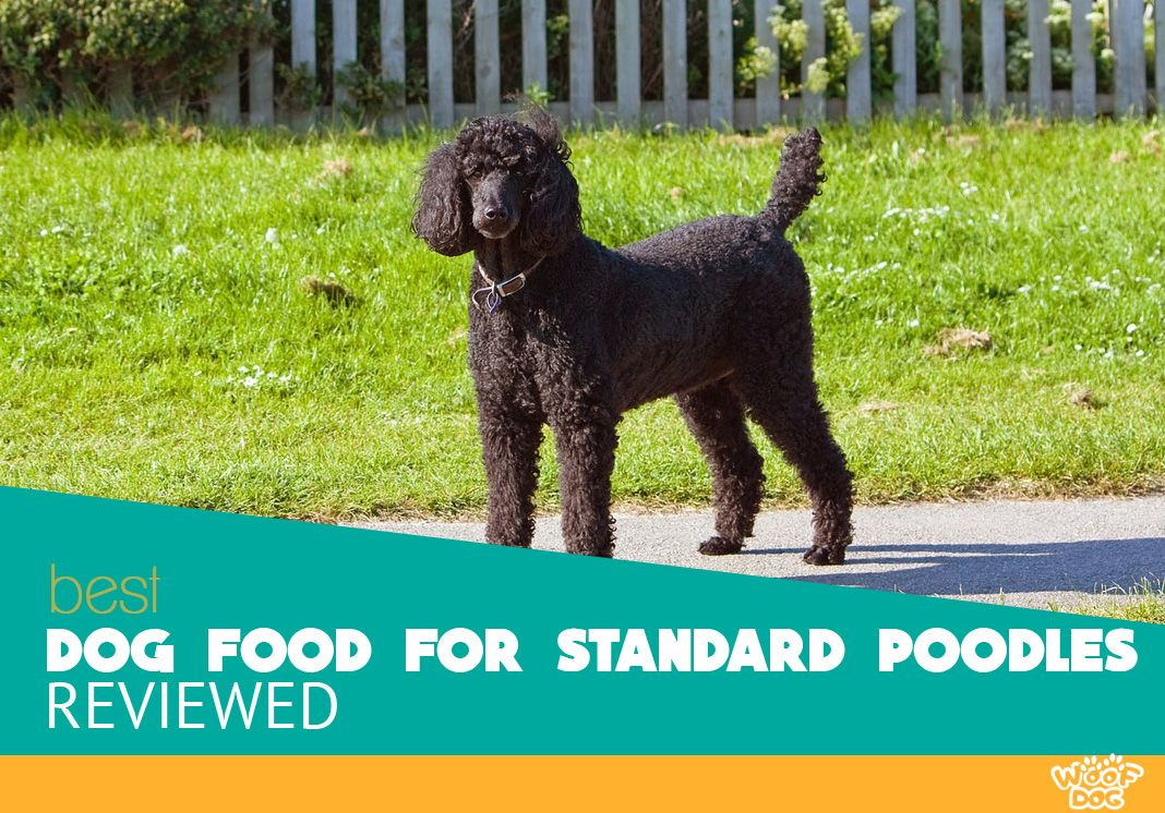 The 7 Best Dog Food For Standard Poodles 2020 Reviews And Ratings Best Dog Food Best Dogs Poodle