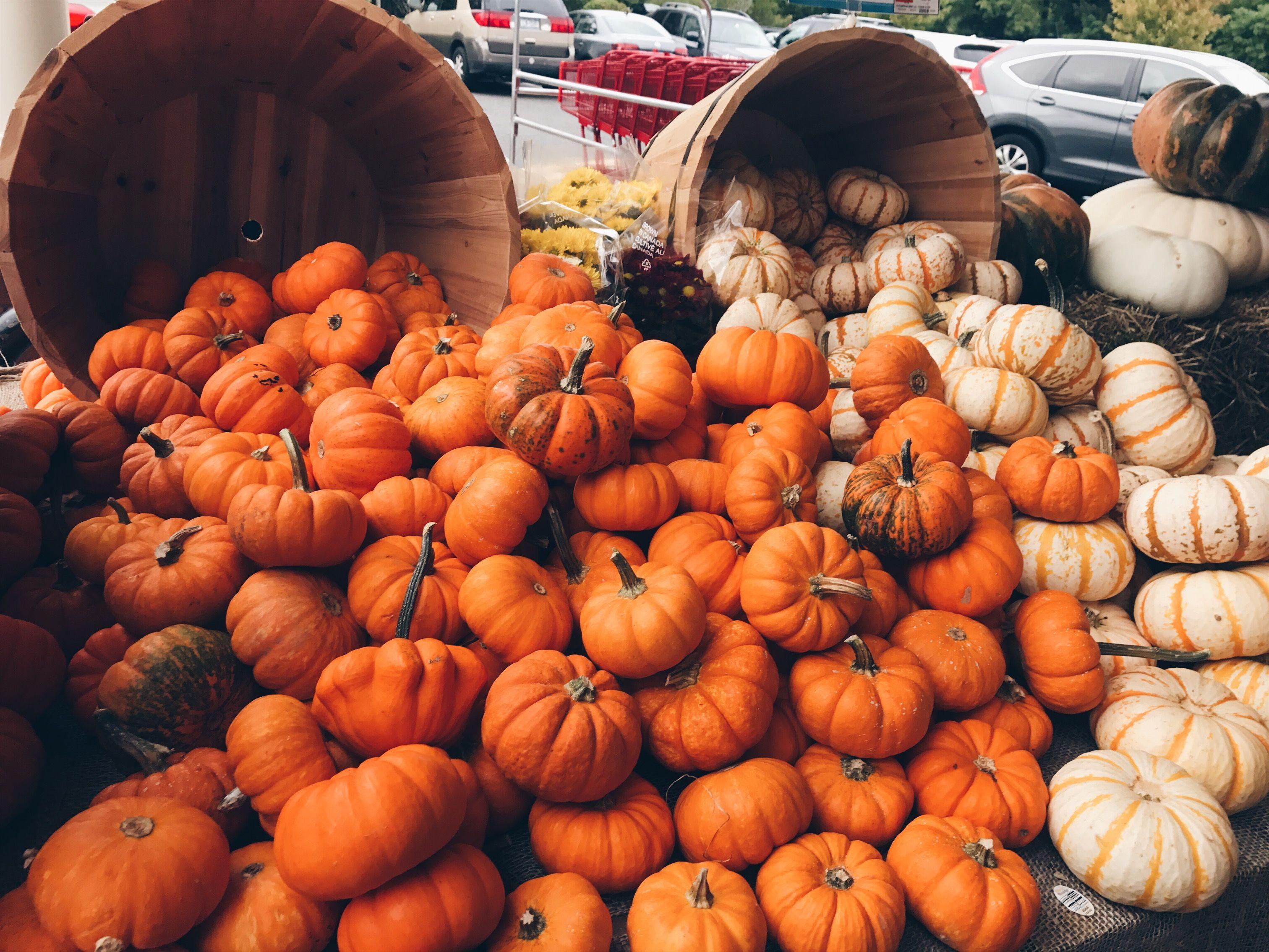 fall pumpkins fall autumn Fall pumpkins, Autumn theme