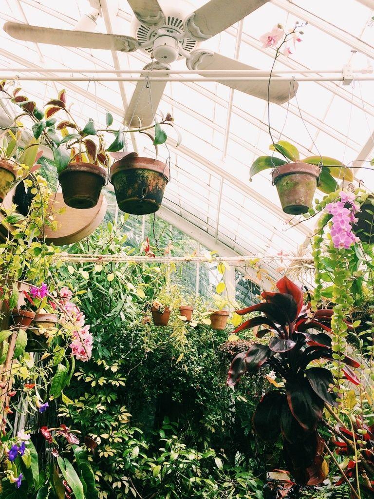 san francisco conservatory of flowers / sfgirlbybay