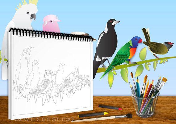 Colouring Book Australian Wildlife Friends By Ozwildlifestudio