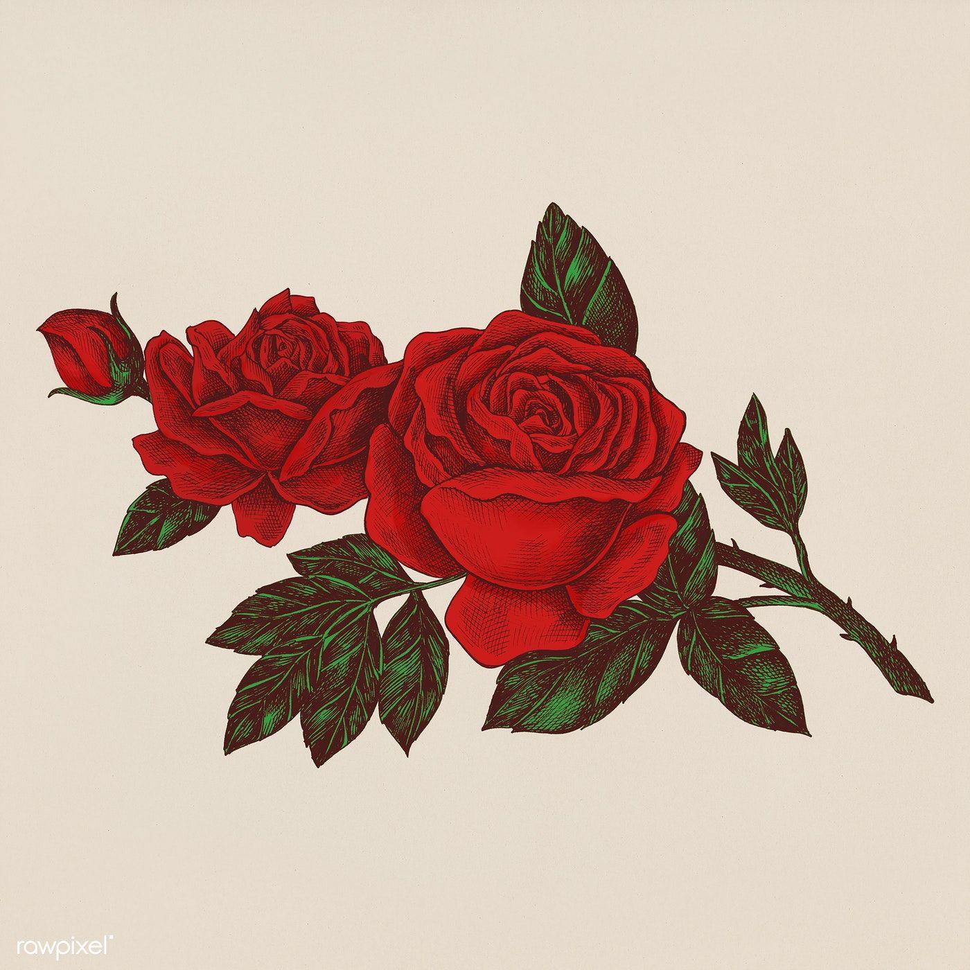 a44f851c56e744b33dcb8d56befa1d45 » Aesthetic Rose Drawing