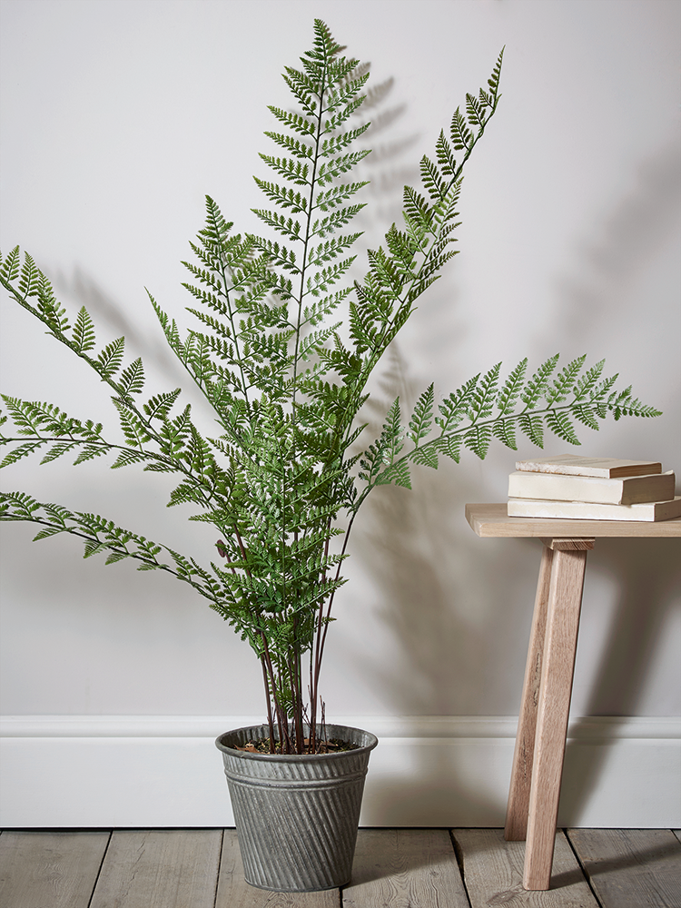 Potted in a fluted zinc effect pot our large fern plant for Green floor plant