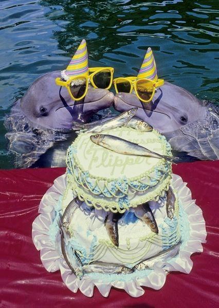 Flippers Anniversary