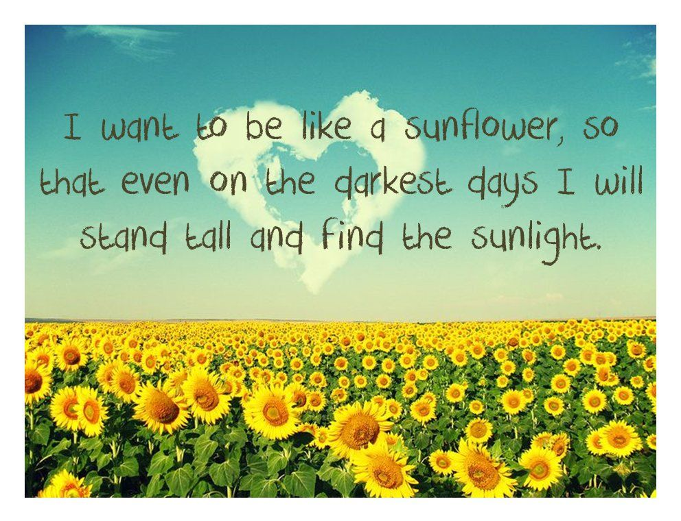 August Sunflower Quotes by quotesgram Sunflower quotes