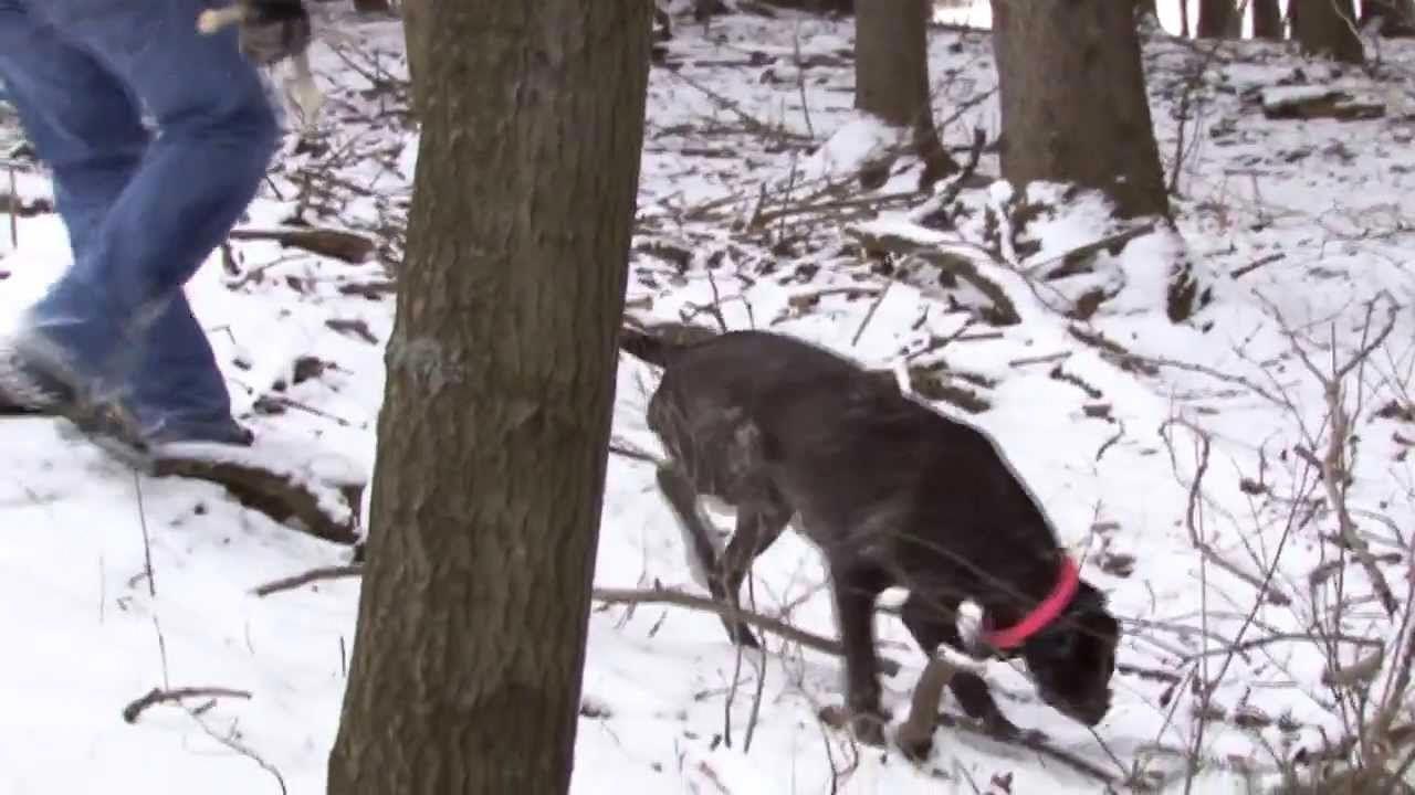 Training Your Dog To Hunt Shed Antlers Dogtrainingobedience Dog