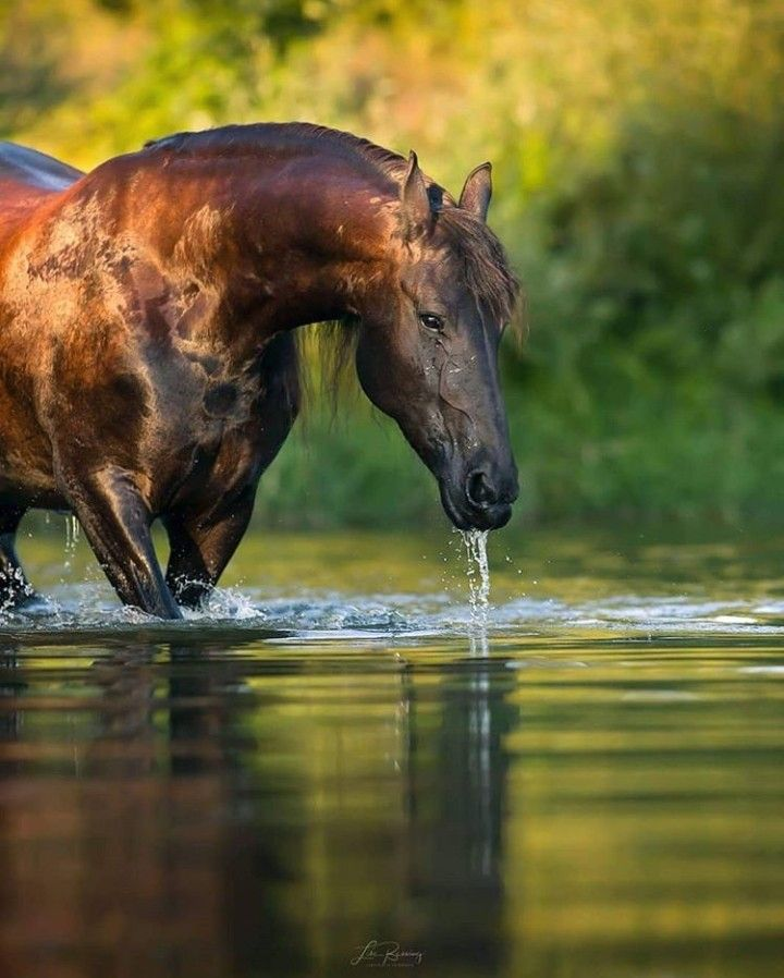 Pin By Renee On Water Horses With Images Horses Pretty Horses Animals Beautiful