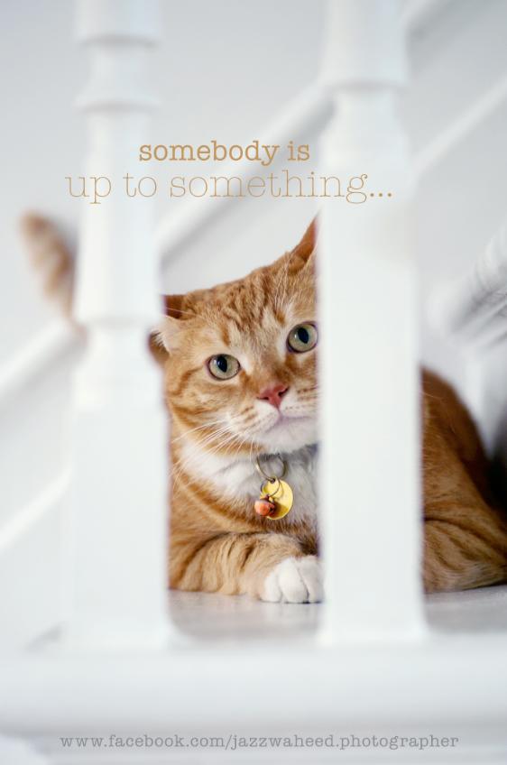 barney the trouble maker Orange cats, Kitten love, Cute