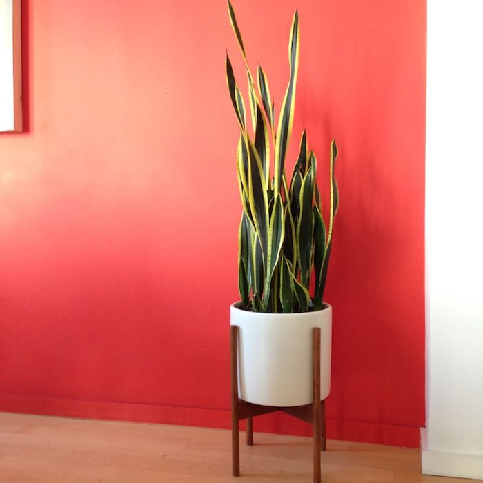 The Best Indoor Plants From The Sill Growing Plants 400 x 300