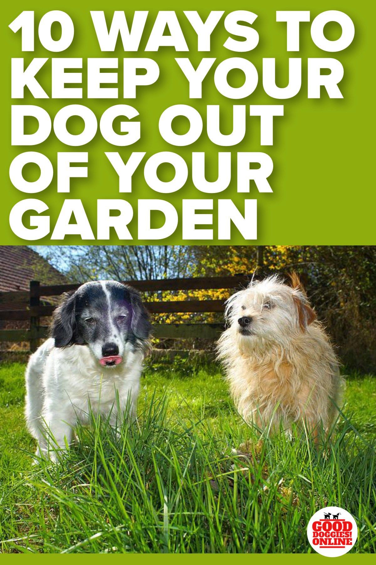 How to Keep Dogs Out of Garden & Flower Beds Dog garden