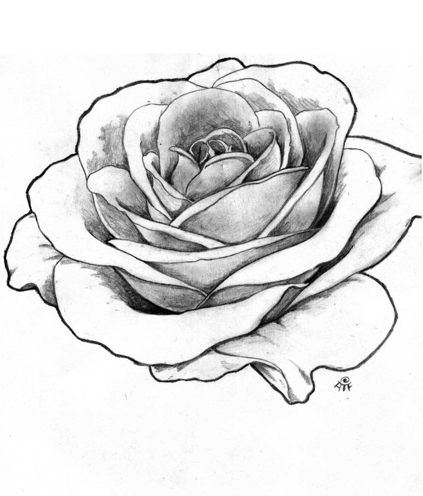 Line Drawing Rose Tattoo : Rose drawing outline roses pinterest art portfolio
