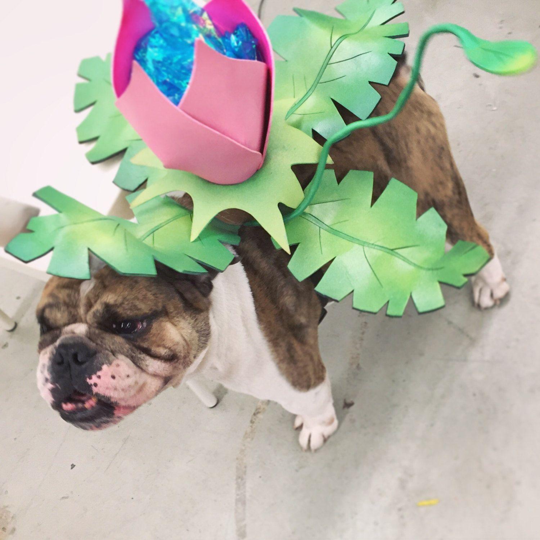 Ivysaur Dog Costume Dog Halloween Costumes Dog Pokemon Pokemon