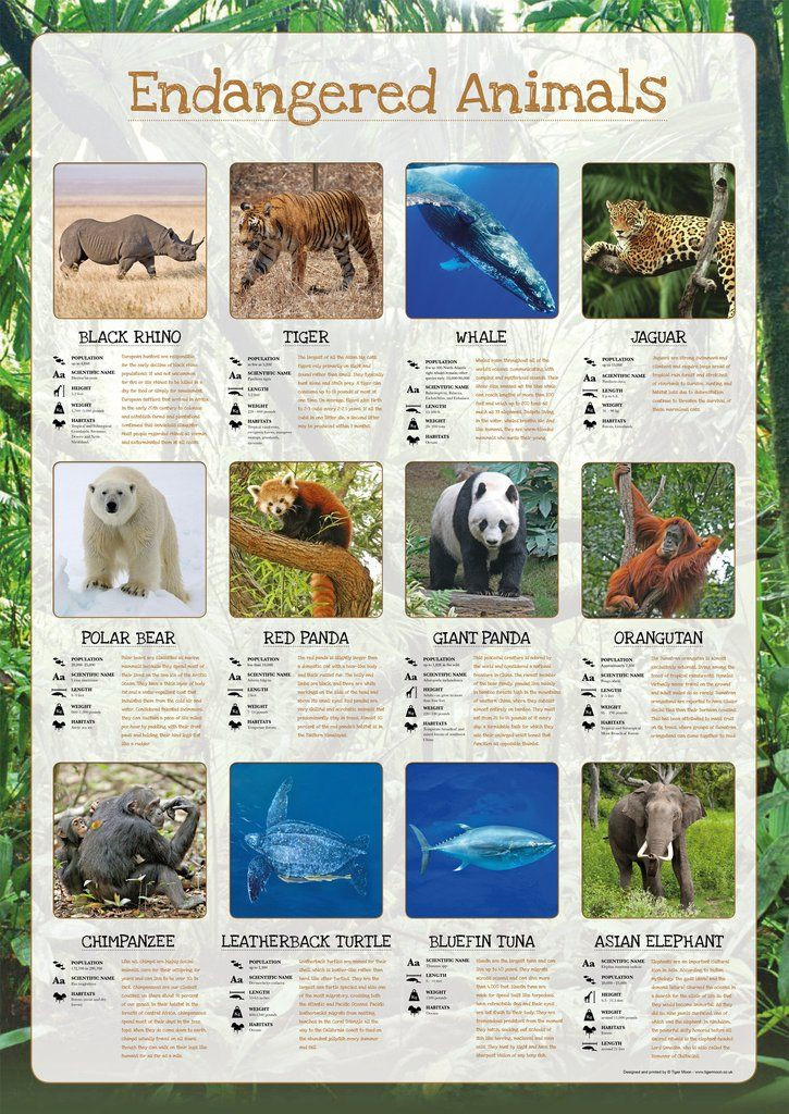 Endangered Animals Poster Endangered animals, Endangered