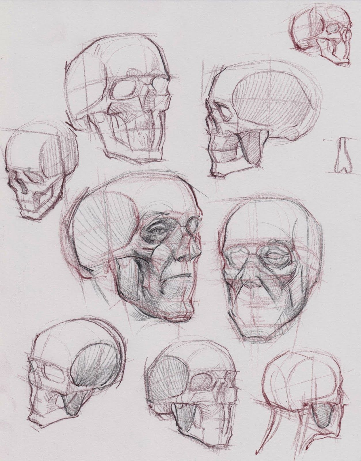 Skull invention by Michael Hampton | Anatomy Reference | Pinterest ...