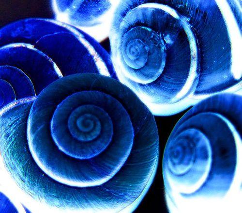 vibrant blue shells art | Natural forms in Art | Pinterest | Shell art