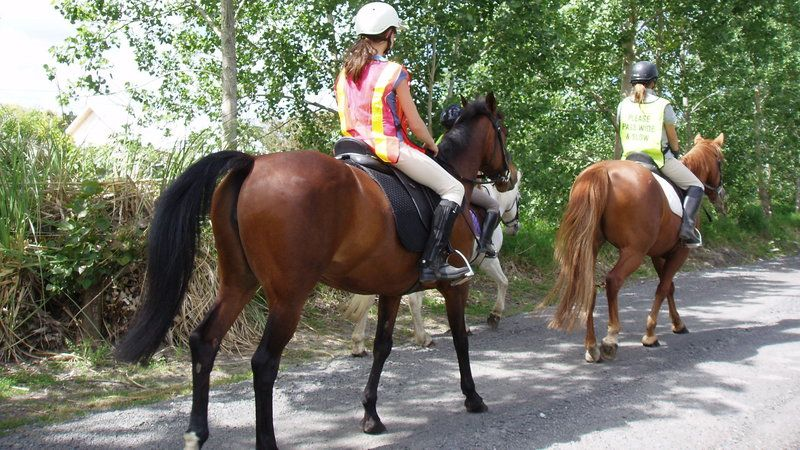Horse riders are legal road users, but are not included in