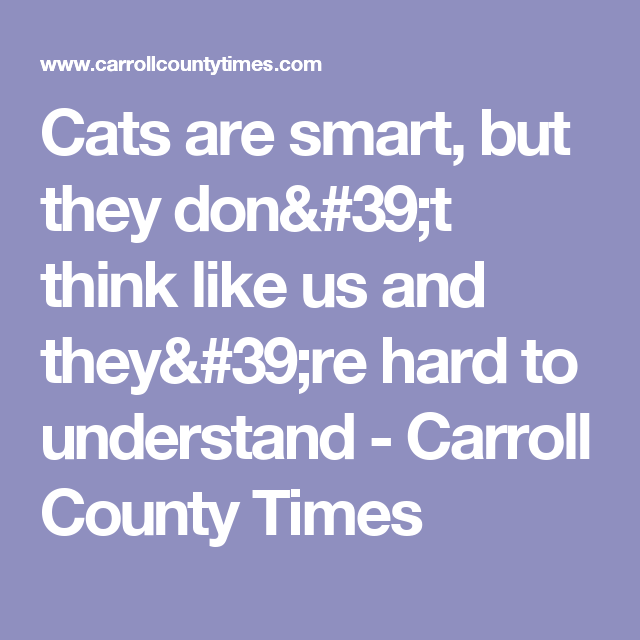 Cats are smart, but they don't think like us and they're hard to understand - Carroll County Times