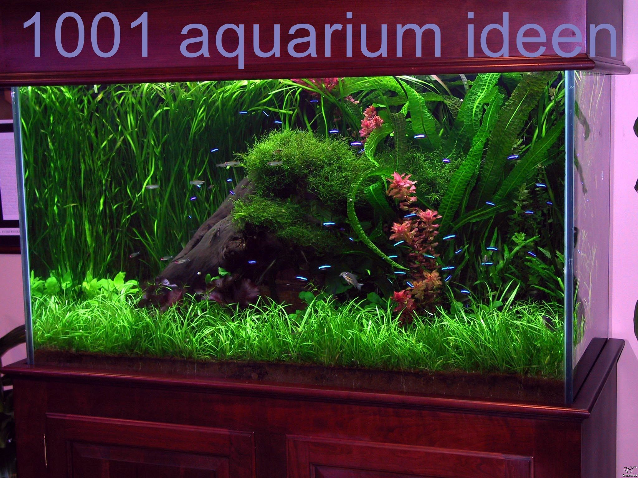Aquarium Ideen Bilder In 2020 Fresh Water Fish Tank Fish Tank Decorations Fish Tank
