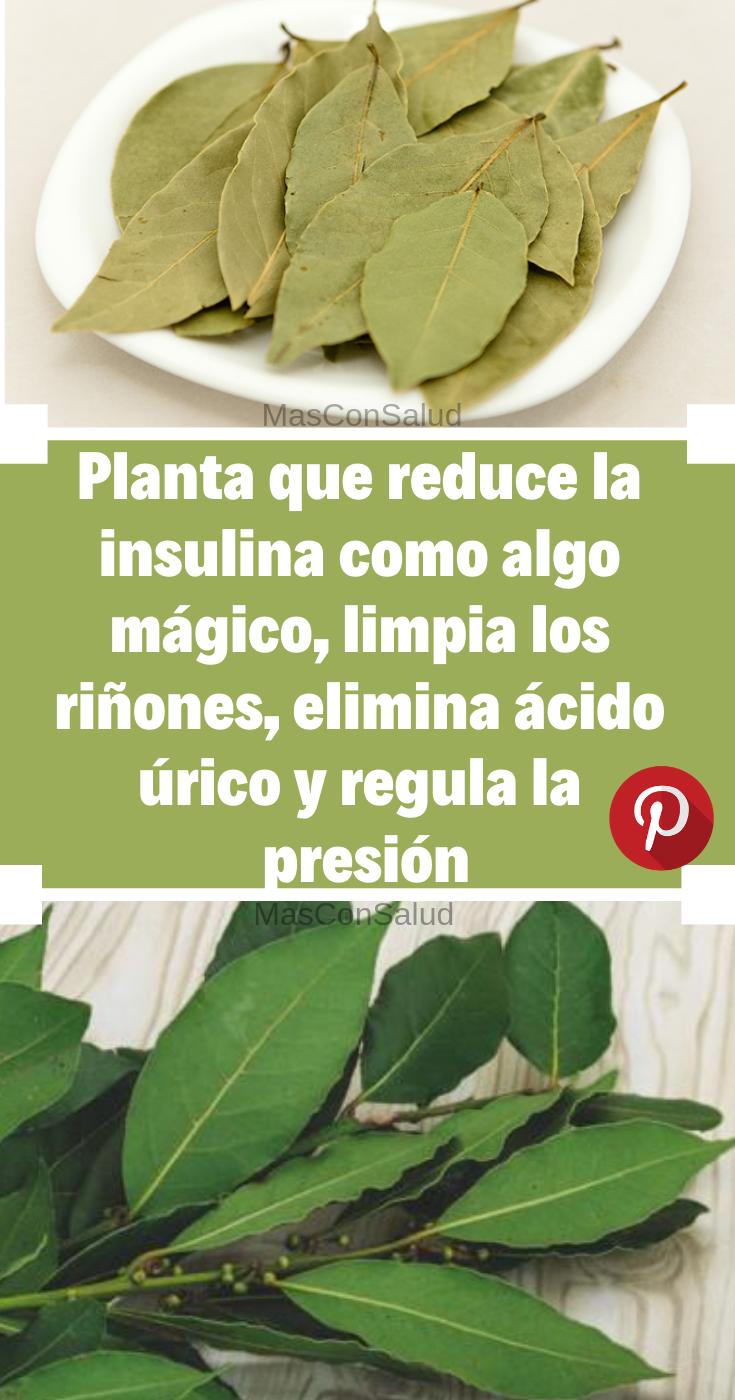 tabletas a base de hierbas para la diabetes