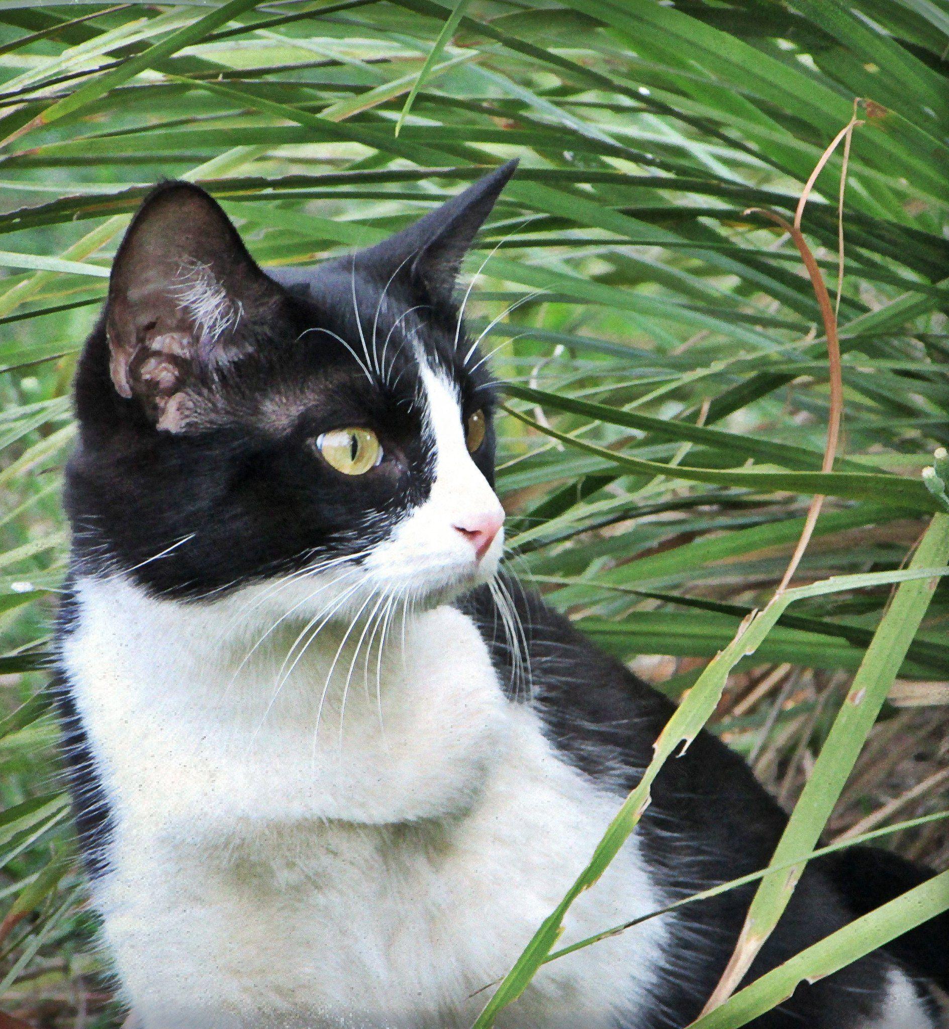 rustic cat Crazy cats, Cats, Cat people
