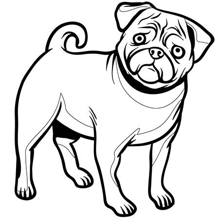 Dessin chien bouledogue fran ais a colorier atelier des - Dessin d un chien ...