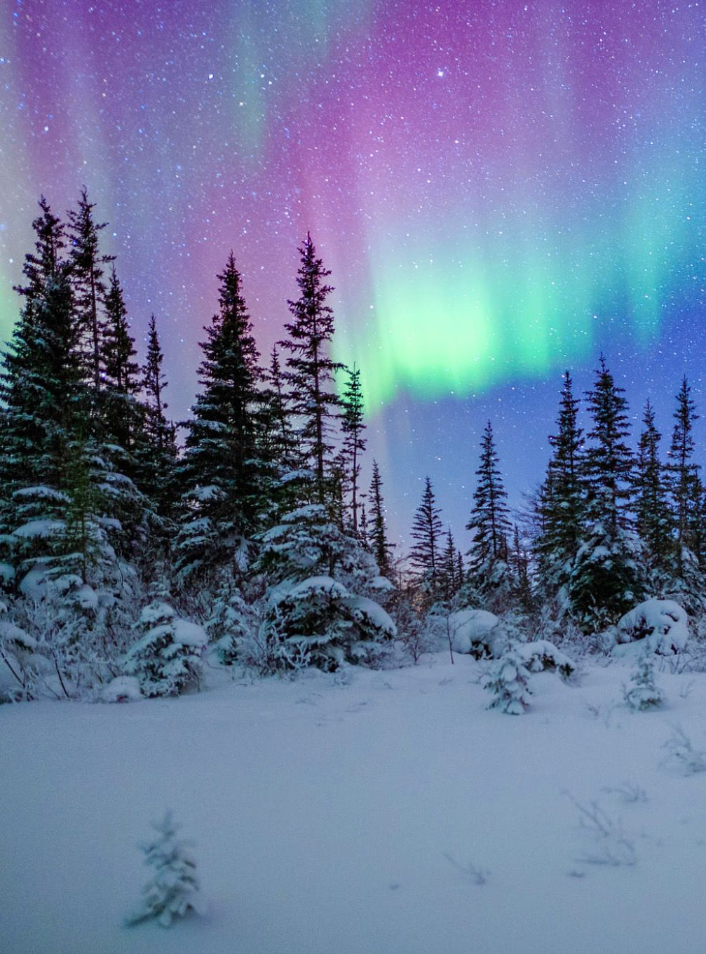 Northern Lights at the edge of the Boreal Forest by David
