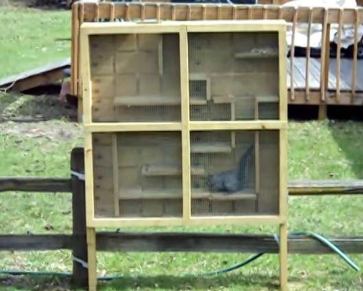 die besten 25 squirrel home ideen auf pinterest beste. Black Bedroom Furniture Sets. Home Design Ideas
