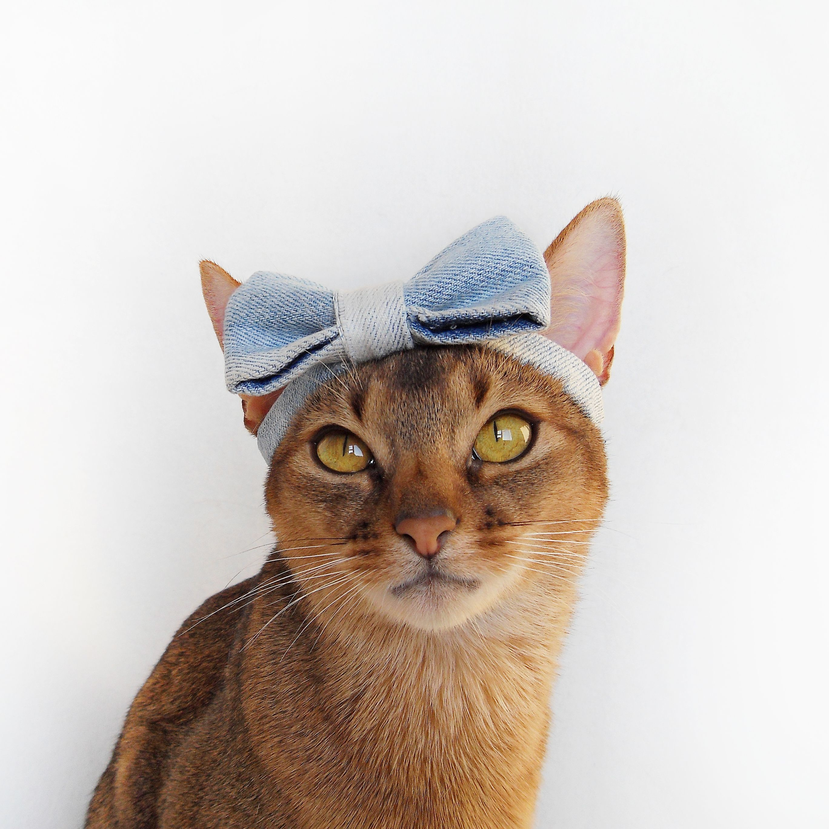 Beautiful cat with a bow | Abyssinian cat and me | Pinterest ...