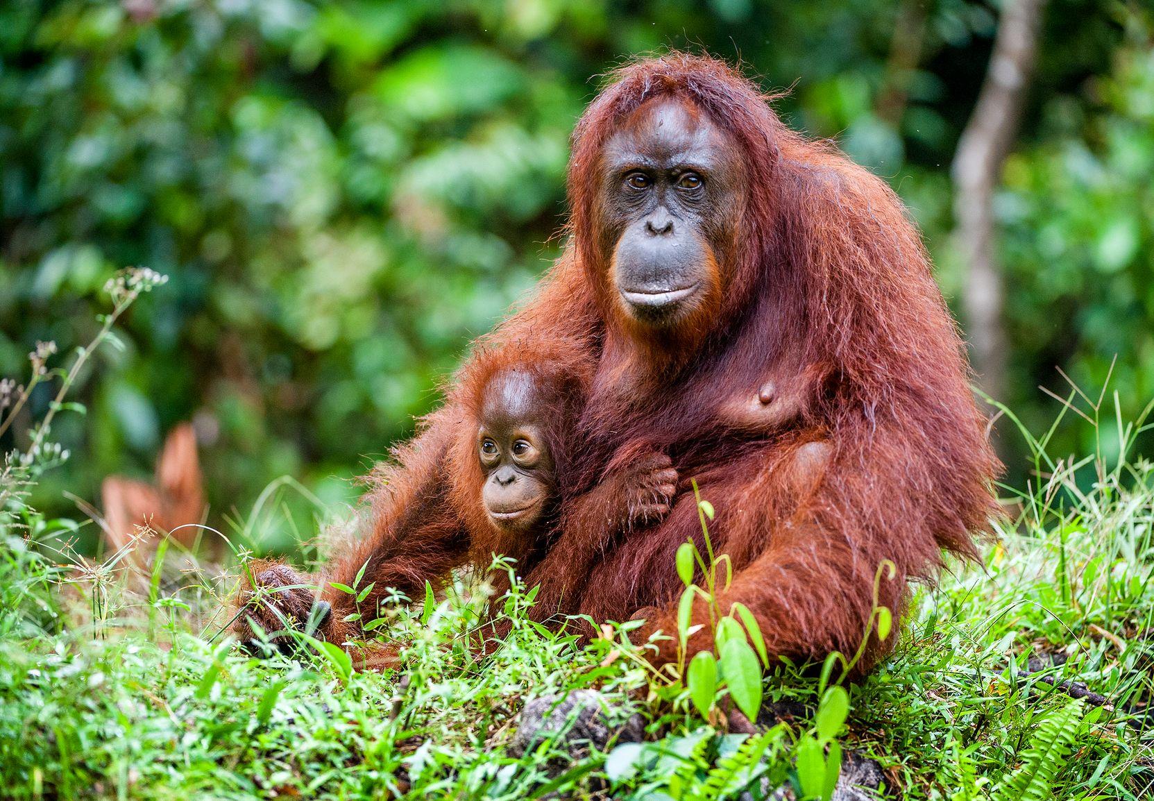 rejser sumatra