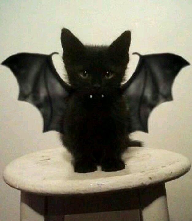 Binky Bat