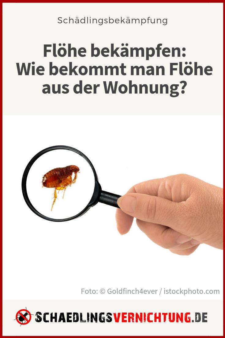Flöhe Im Haus : fl he im haus zu bek mpfen ist nicht unm glich da tiere ~ A.2002-acura-tl-radio.info Haus und Dekorationen