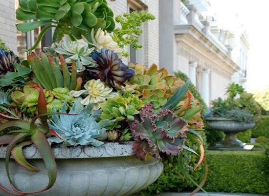 Dise o jardines suculentas dstudio arreglos cactus y for Diseno de jardines para eventos