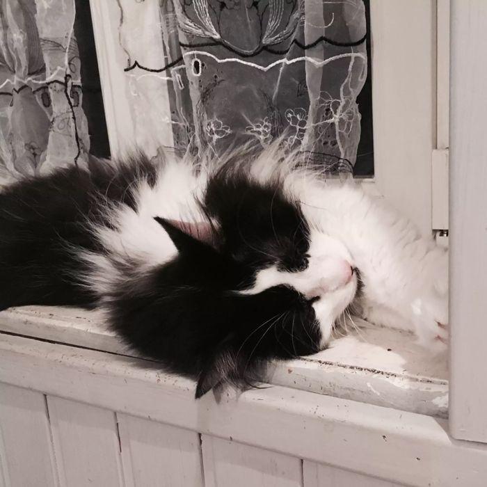 ᕈųяяʄᏋᏣɬ Ꮭ♡ⱴɛ cat in the window